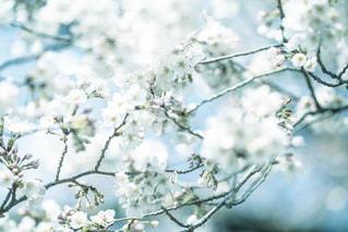 木の枝にとまった鳥の写真・画像素材[2138185]