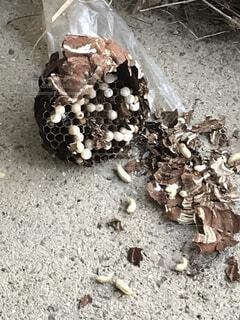 スズメバチの巣の写真・画像素材[4427060]
