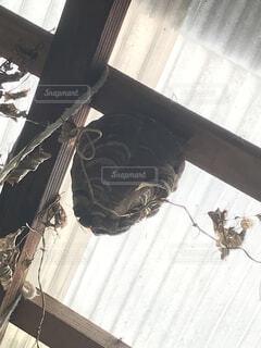スズメバチの巣の写真・画像素材[4427062]
