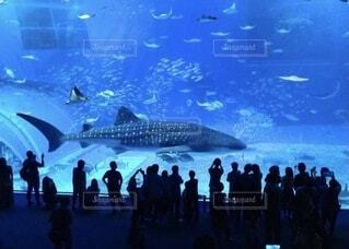 美ら海水族館の写真・画像素材[4104353]