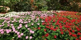 花園のクローズアップの写真・画像素材[4103677]