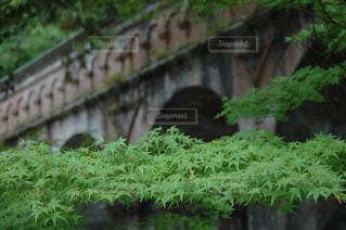 京都の写真・画像素材[174381]