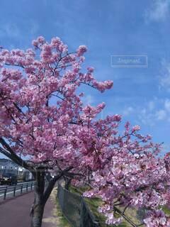 ピンクの花を持つ木の写真・画像素材[4225166]