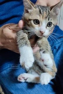 かわいい子猫の写真・画像素材[4574874]