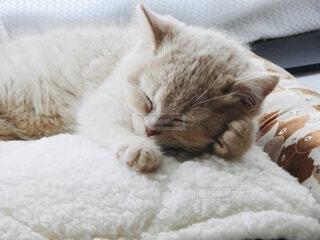 寝る子猫の写真・画像素材[4112546]