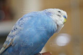 青の写真・画像素材[302371]