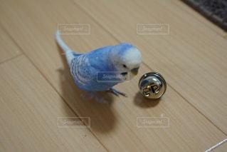 No.306071 鳥