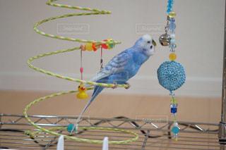 鳥 - No.307654