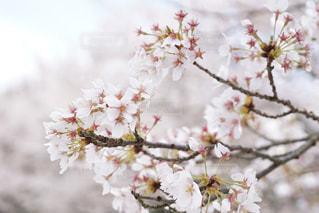 花の写真・画像素材[443596]