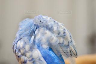 近くに鳥のアップ - No.728744