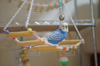 カウンターに座っている鳥の写真・画像素材[898162]
