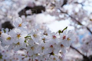 近くの花のアップ - No.1099413