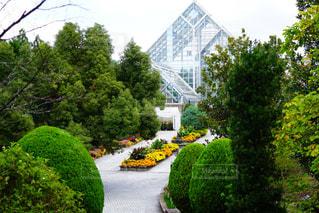 植物園の写真・画像素材[1580172]