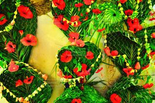花の写真・画像素材[181106]