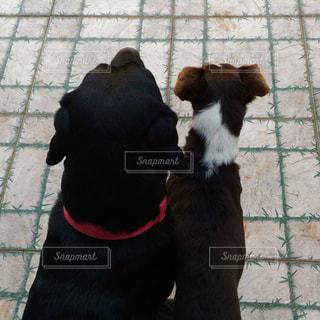 犬の写真・画像素材[177751]