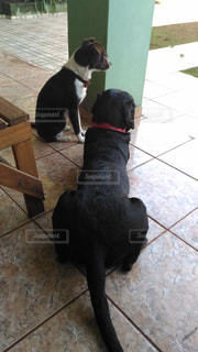 犬の写真・画像素材[177756]