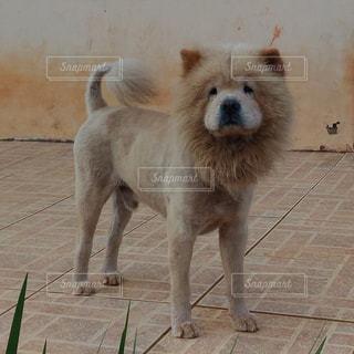 犬の写真・画像素材[180646]