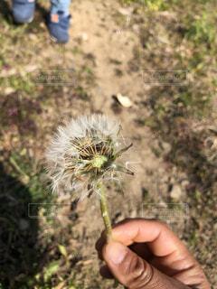 植物を持つ手の写真・画像素材[4144392]