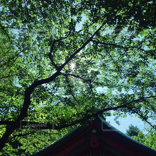 風景 - No.219660