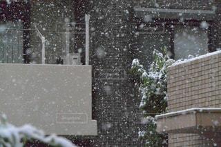 冬の写真・画像素材[264346]