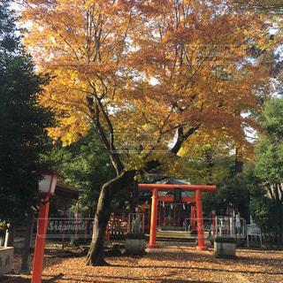 No.285967 風景
