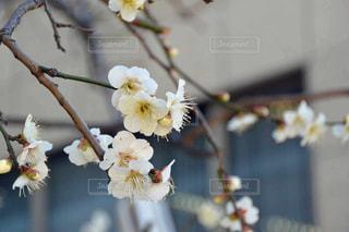 自然の写真・画像素材[338924]