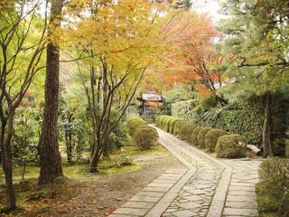 森に向かう道 - No.792314