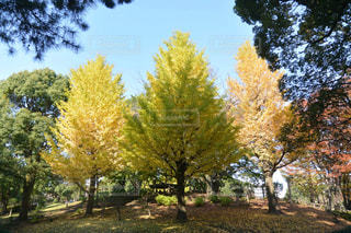 フォレスト内のツリー - No.849028