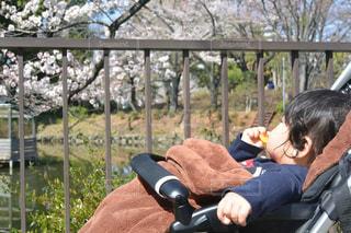 赤ちゃんが初めてのお花見 - No.1082958