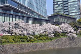 オフィスビルと桜 - No.1090912