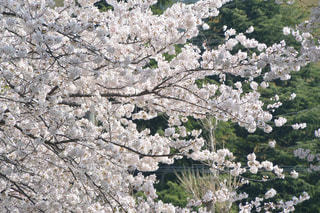 春の写真・画像素材[1091470]