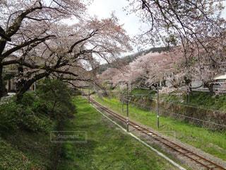 木の隣に下り列車を走行する列車を追跡します。 - No.1147789