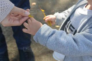 ママに落ち葉を渡す子どもの写真・画像素材[1609736]