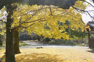 フォレスト内のツリーの写真・画像素材[1636978]