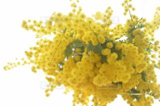 近くの花のアップの写真・画像素材[1831500]