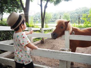馬をふりかじさせるフェンスの隣に立つ小さな女の子の写真・画像素材[2434471]
