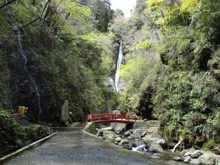 森の近くで列車を走行する列車の写真・画像素材[2434713]