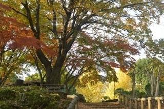 秋の写真・画像素材[2634129]