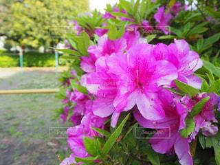 花のクローズアップの写真・画像素材[3164423]