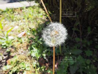 庭の植物の写真・画像素材[3199238]