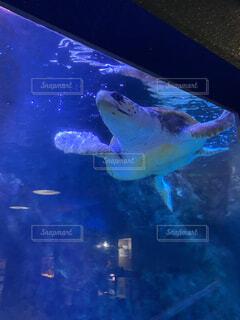 有意義に泳ぐウミガメの写真・画像素材[4135254]