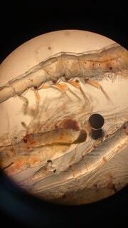 顕微鏡の世界の写真・画像素材[4128389]