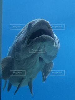 魚のアホ顔の写真・画像素材[4130267]