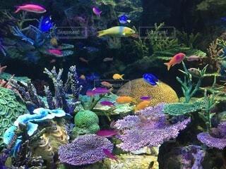 色とりどりの魚と珊瑚礁の写真・画像素材[4159646]