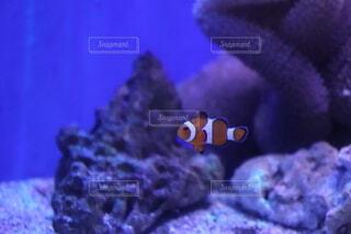 サンゴのクローズアップの写真・画像素材[4132878]