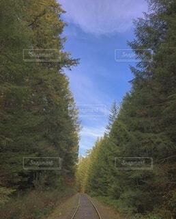 山の中の線路の写真・画像素材[4135135]