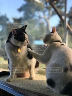 猫と猫の写真・画像素材[4136673]