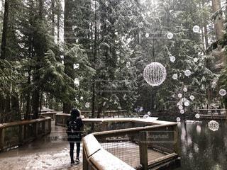 雪が降る森の写真・画像素材[4139435]