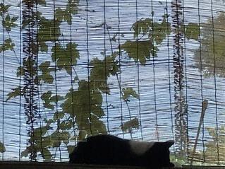 夏バテ気味の猫の写真・画像素材[4139585]