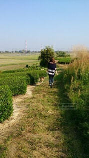 犬と散歩の写真・画像素材[4139596]